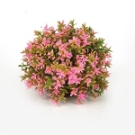 BiOrb Topiary Pink Flower  Ball Plant 46088