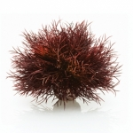BiOrb Reef One Sea Lily Crimson 46077